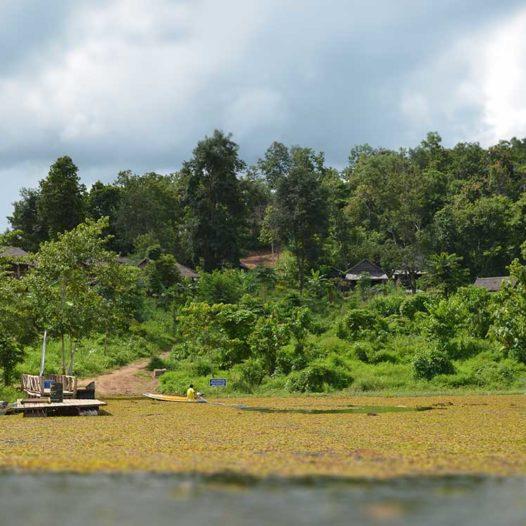 Das Elephant Conservation Center liegt eingebettet mittem im Urwald.