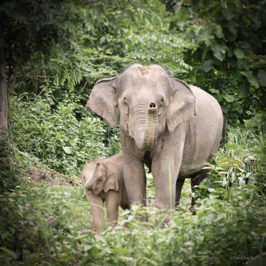 Elefantöse Begrüssung im ECC.